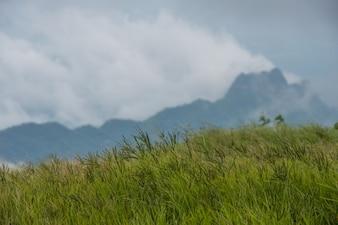 Champ de pré vert herbe avec fond de montagne et de ciel, Thaïlande