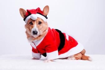 Chien habillé en Père Noël
