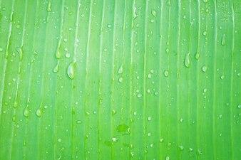 Closeup, de, banane, feuille verte, à, résumé, eau