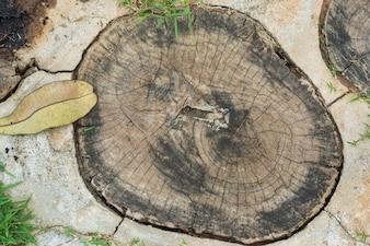 Cercle concentrique vecteurs et photos gratuites - Coupe transversale d un tronc d arbre ...