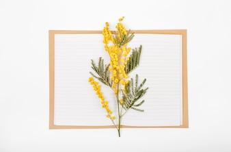 Ensemble de printemps de fleurs de mimosa une branche et un cahier sur un fond blanc
