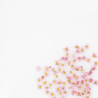 Fleurs fraîches délicates sur fond blanc