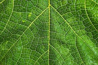 Fond de texture de feuille d'arbre frais et vert pour le concept de jour de la terre du monde.