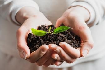 Gros plan, main, tenue, semis, terre