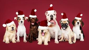 Groupe de chiots portant des chapeaux de Noël