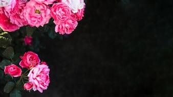 Jolies fleurs sur fond sombre
