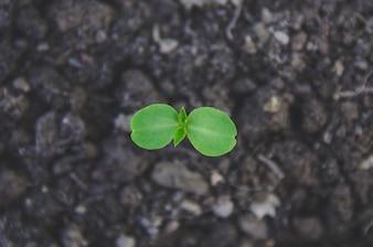 La verdure de la jeune plante et les jeunes plants poussent dans le sol à la lumière du matin.