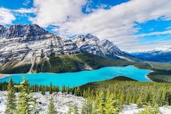 Lac Peyto dans le parc national Banff, Alberta, Canada.
