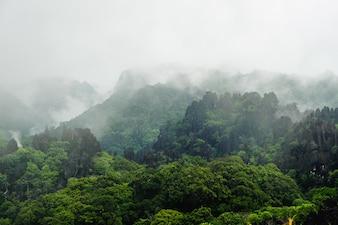 Le brouillard recouvre des arbres éloignés sur un versant calcaire du Laos
