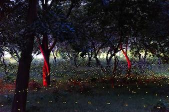 Luciole volant dans la forêt de nuit en Thaïlande, longue exposition au grain.