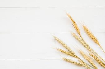 Oreille de blé de couleur dorée devant un mur en bois blanc
