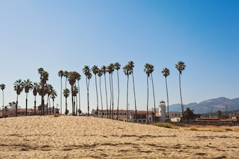 Plage de sable de Santa Barbara avec de grands palmiers