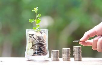 Plant Growing In Savings Coins - Économiser de l'argent