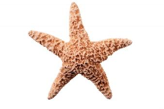 Poisson étoile isolé sur fond blanc