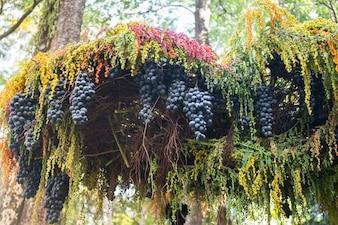 Raisins mûrs accrochés sur un arbre dans le festival de la nourriture