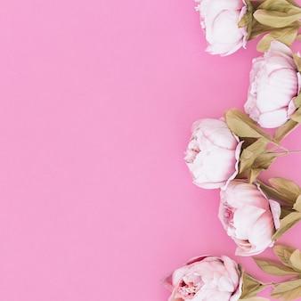 Roses sur fond rose avec espace sur la gauche