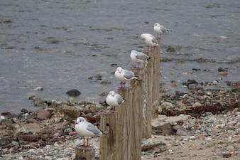 Six mouettes alignées sur leurs pôles face à la mer