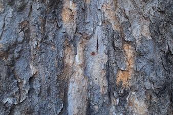 Texture de l'arbre