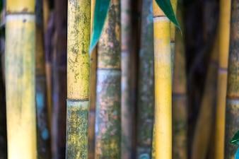 Texture végétale de canne à sucre fraîche comme un joli fond naturel