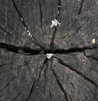 Tronc de bois