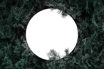 Une texture de branches d'arbres à fourrure pour une carte de Noël