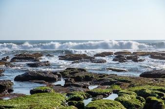 Vague se brisant sur une pierre d'algues