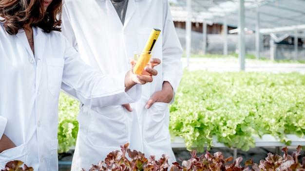 2 gli scienziati hanno esaminato la qualità dell'insalata e della lattuga di verdure biologiche della fattoria idroponica dell'agricoltore.