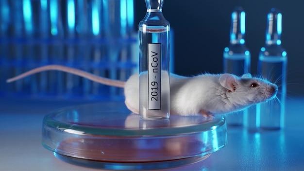 Provetta 2019-ncov. sviluppo di vaccini e test su animali da laboratorio. topo albino da laboratorio vicino alla dose di vaccino