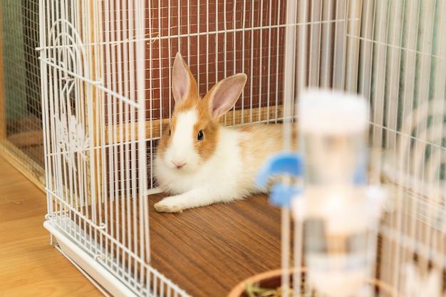 Coniglietto di 3 mesi sdraiato nella sua gabbia