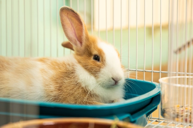 Coniglietto di 3 mesi sdraiato nella sua gabbia da toilette
