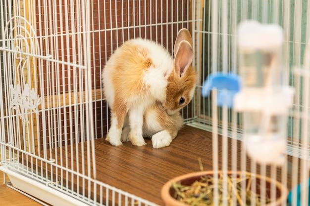 Coniglietto di 3 mesi autopulente nella sua gabbia