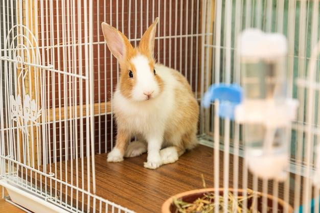 Coniglietto di 3 mesi seduto nella sua gabbia