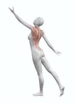 Figura femminile 3d che raggiunge con la mappa muscolare