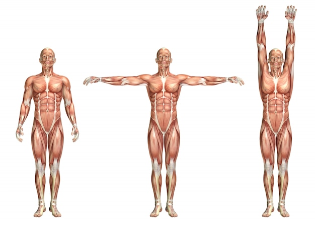 Figura medica 3d che mostra abduzione e adduzione della spalla
