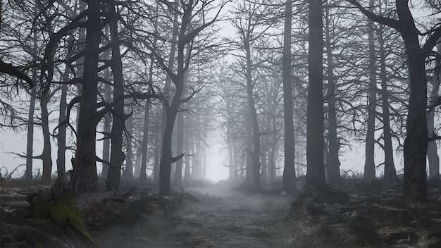 Rendering 3d di una foresta spaventosa e vuota nella nebbia