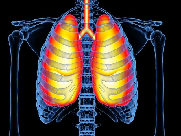 3d rendering radiografia del torace con i polmoni nel dolore