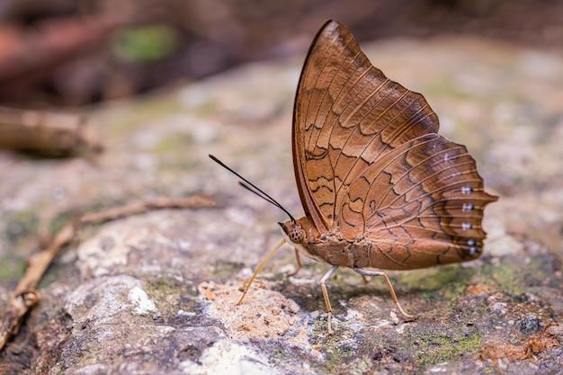 Sulla farfalla colorata nella giornata di sole