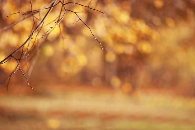 Sfondi autunnali astratti per la progettazione. copia spazio. brunch autunnali su foglie d'oro sfocate.