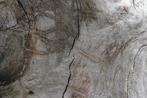 Sfondo astratto del vecchio tronco di albero incrinato