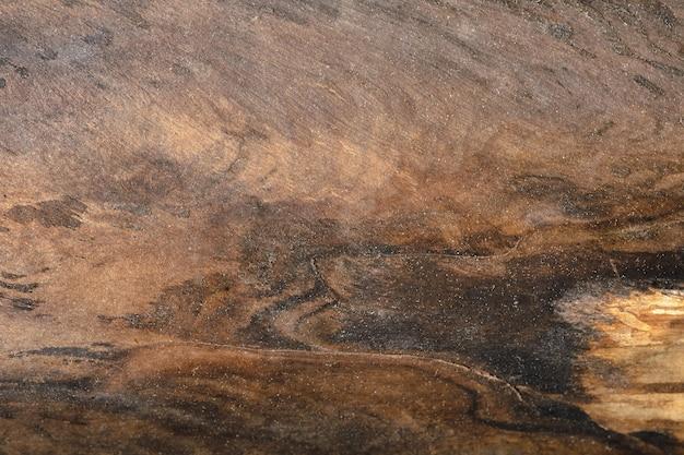Sfondo astratto del vecchio tronco d'albero. topview del primo piano per le opere d'arte.