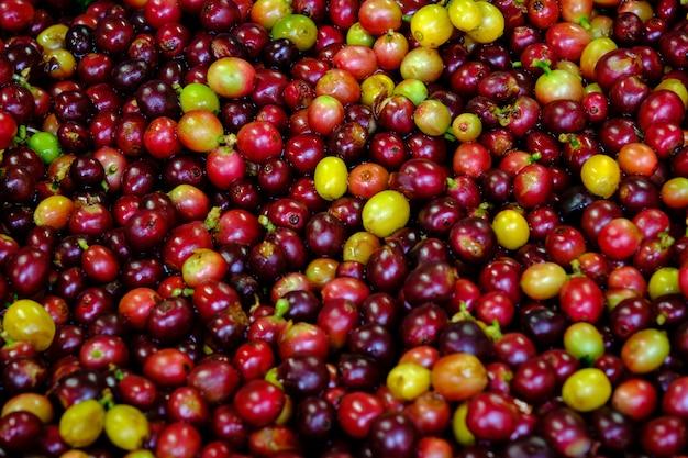 Ciliegia cruda del fondo astratto e chicchi di caffè gialli rossi