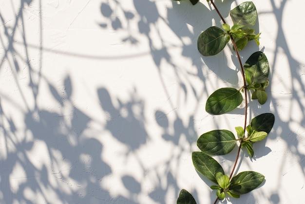 Sfondo astratto di ombre foglie su un bianco