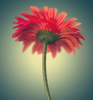 Sfondo astratto con un bellissimo fiore di gerbera rossa