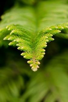 Sfuocatura astratta lo sfondo verde e la condizione fresca