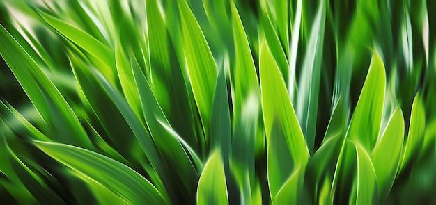 Erba verde vaga estratto