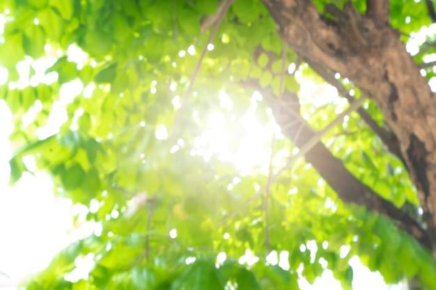Fondo astratto della natura dell'albero della sfuocatura del bokeh con luce solare su estate.
