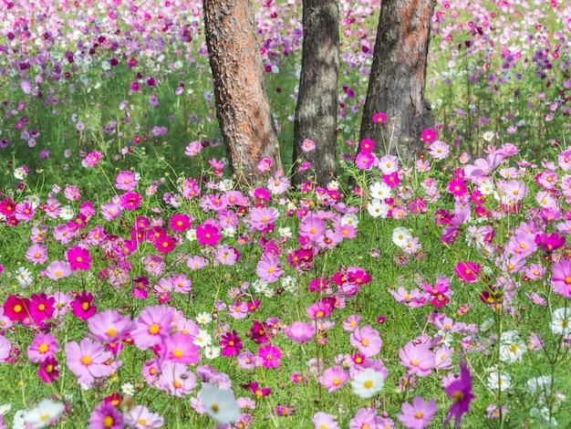 Giacimento ed albero di fiori astratti dell'universo per il fondo della natura