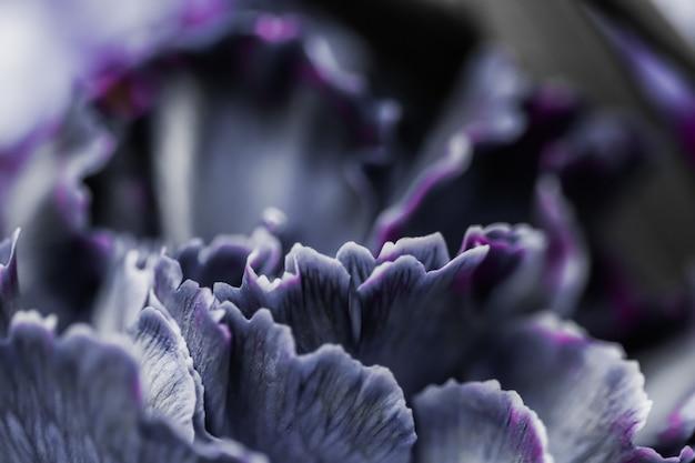 Sfondo floreale astratto nero fiore di garofano macro fiori sullo sfondo per il design del marchio di vacanza