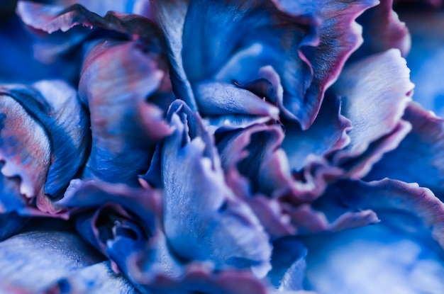 Contesto floreale astratto dei fiori di macro del fiore del garofano blu del fondo per il disegno di marca di festa