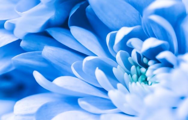 Sfondo floreale astratto blu crisantemo fiore macro fiori sullo sfondo per il design del marchio di vacanza